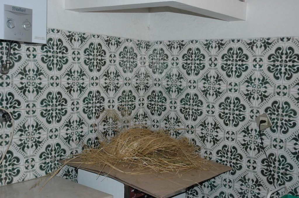 limpa chaminés Limpeza de Chaminé Cozinha